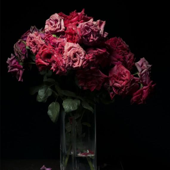 Roses 2604